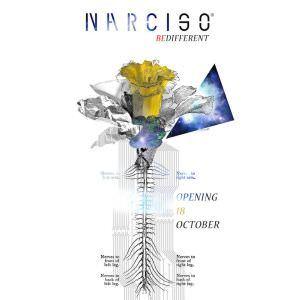 Apertura invernale del Narciso